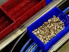 Opnieuw Statenvragen over champignonkwekerij Gemert