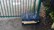 Katjes in kartonnen doos gedumpt aan poort dierenasiel