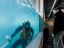 Duikers bedrijf uit Rouveen maken ijsberenbassin in Wildlands schoon