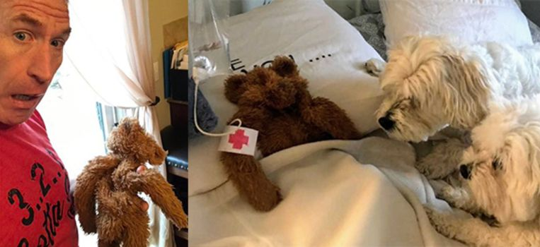 Als bezorgde ouders zitten twee hondjes aan het ziektebed van de knuffelbeer.