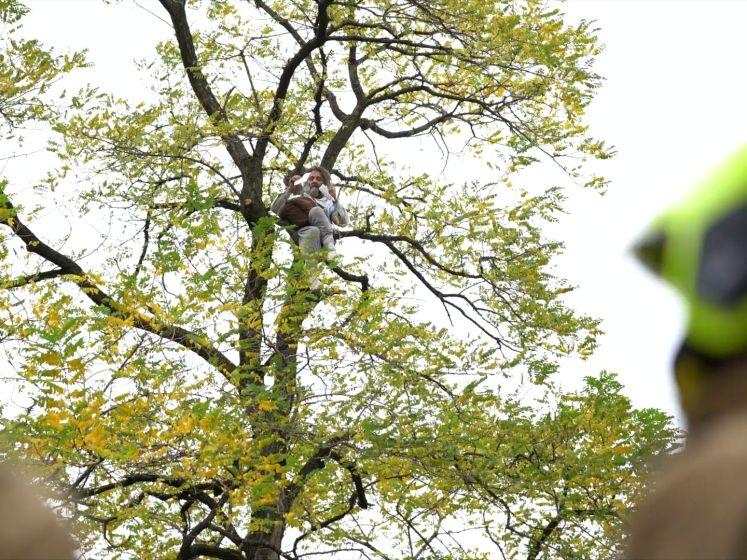 Betoger uit metershoge boom gehaald