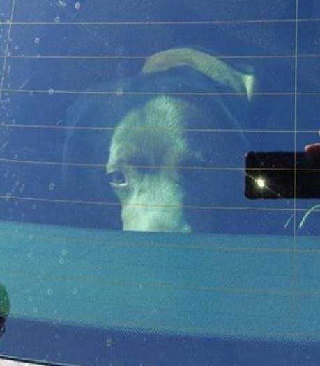 Hond gered uit snikhete auto in Winterswijk