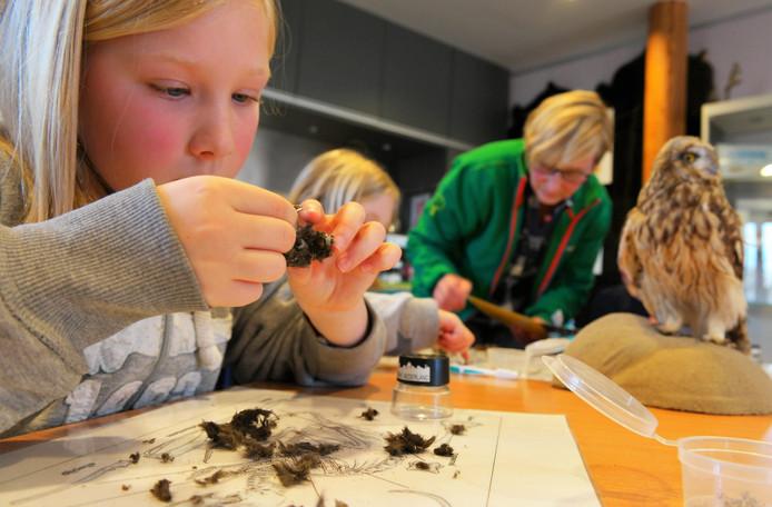 Een uil kan de botjes en haren van een muis niet verteren, die braken ze uit. Kinderen gaan op zoek naar deze resten.