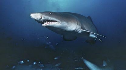 Armen en armband gevonden in maag haai: vermoedelijk van vermiste kajakker