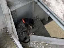 Coincée à plus de 36 mètres au-dessus du vide, une chienne sauvée par un ingénieur des ponts
