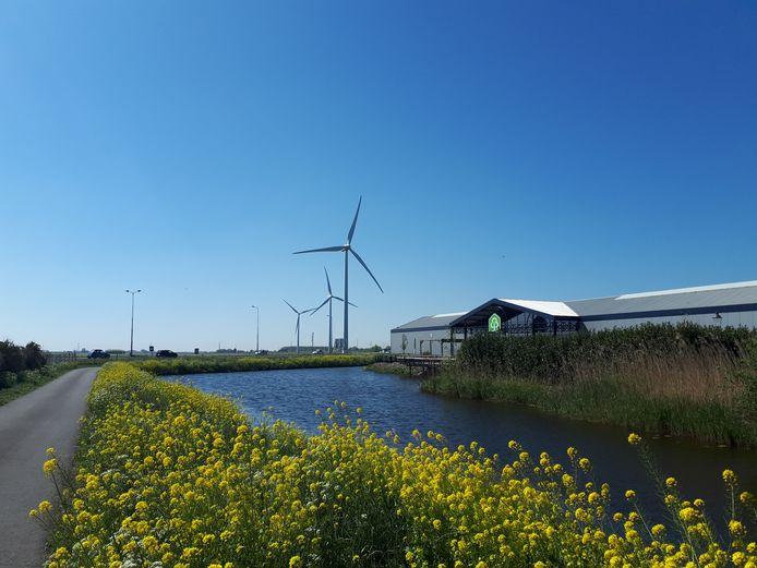 De Rijnstreek hoopt dat er meer windmolens en zonneweides in het Groene Hart kunnen komen.