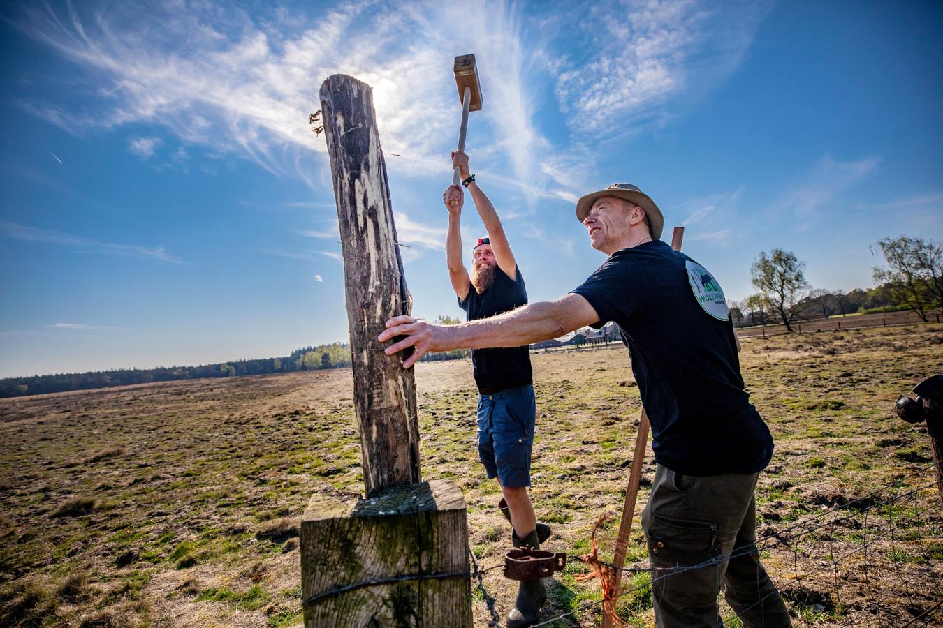 Vrijiwlligers van Wolf Fencing helpen bij de aanleg van wolfwerend raster.