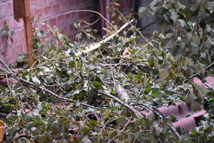 In De Panne waaide een boom op een dak van een garage. Enkele takken belandden binnen.
