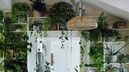 """Geen tuin? Breng het oerwoud naar je interieur met een hippe """"urban jungle"""""""