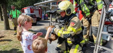 Brandweerman Bartjan redt verhitte kat Saartje uit hoge boom in Epe: 'Ik haal hier waardering uit'