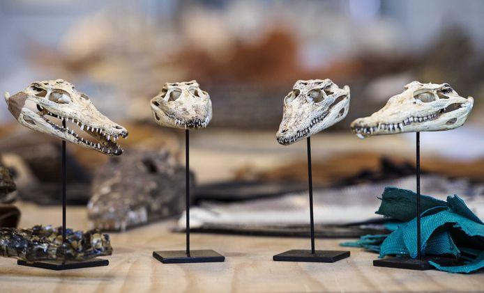 Deel van de recordvangst van onder meer schedels vier jaar geleden in Berghem, hier te zien in een een opslagloods in Rotterdam.