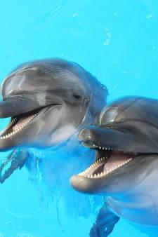 Des dauphins perturbent une compétition de jet-ski en Corse