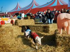 Horeca Uden en de Knoerissen botsen over carnavalstent op Markt