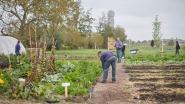 Samen tuinieren in een ecologische moestuin op domein De IJzerboomgaard