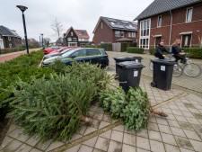 Inzamelen kerstbomen begint in de Betuwe; 'Zet de bomen zonder versieringen op straat'