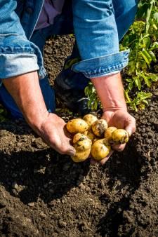 Aardappeltelers trekken klacht vanwege 'misleidende' Lidl-reclame in: 'We hebben ons vergaloppeerd'