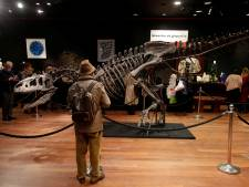 Skelet van 'de opa van de T-rex' verkocht voor meer dan 3 miljoen