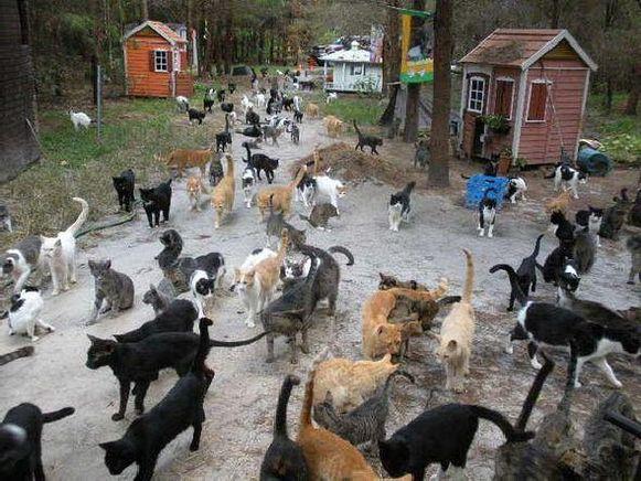 Het Turkse dorpje Samsun is een echt kattenparadijs.