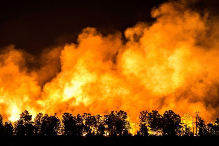 De natuurbrand in de Mariapeel, in de buurt van Deurne. Beeld ANP