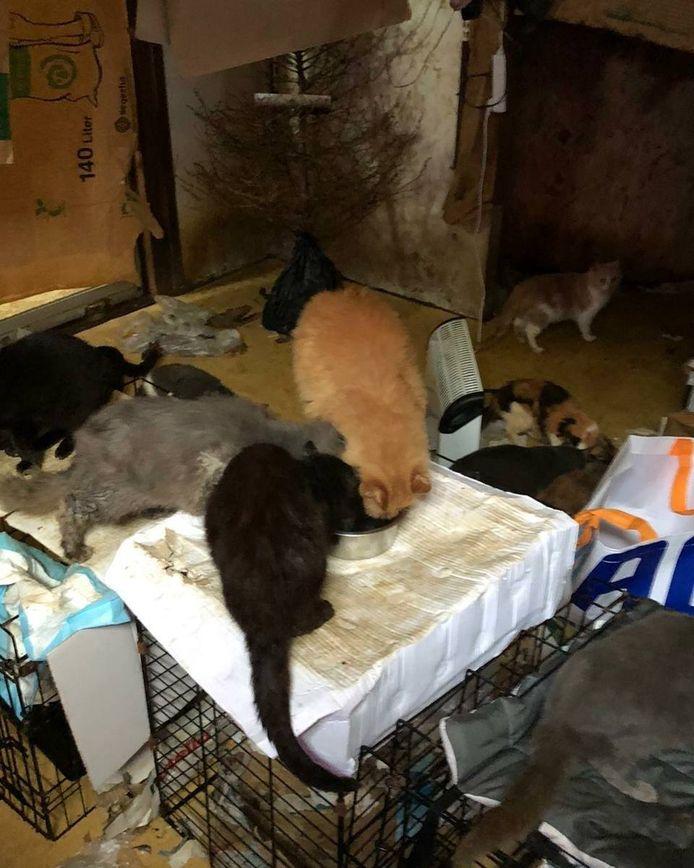 De katten in het vervuilde huis.