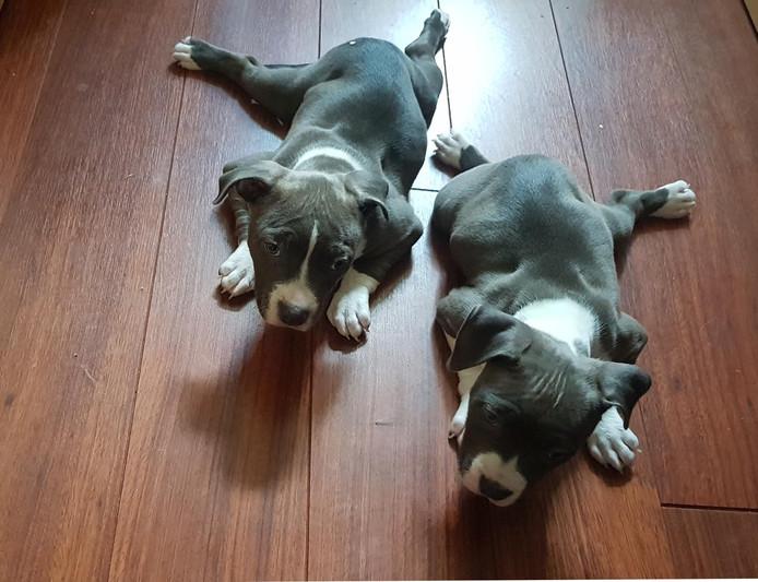 De mismaakte pups.