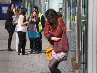 Zwerm bijen teistert winkelstraat in hartje Londen
