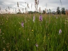 Orchideeën gejat en bloemen en graan vertrapt in Eindhoven en omgeving
