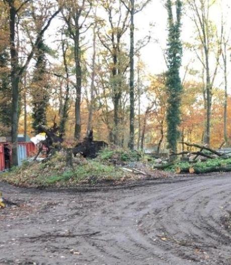 DierenPark: 'Alle vergunningen voor bomenkap op orde'