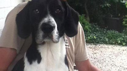 Zaak rond vergiftiging van honden vijf maanden uitgesteld
