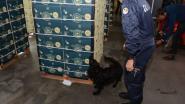 """Filip Dewinter (Vl. Belang): """"Douaniers bewaken 12 ton cocaine omdat verbrandingsoven stilligt"""""""