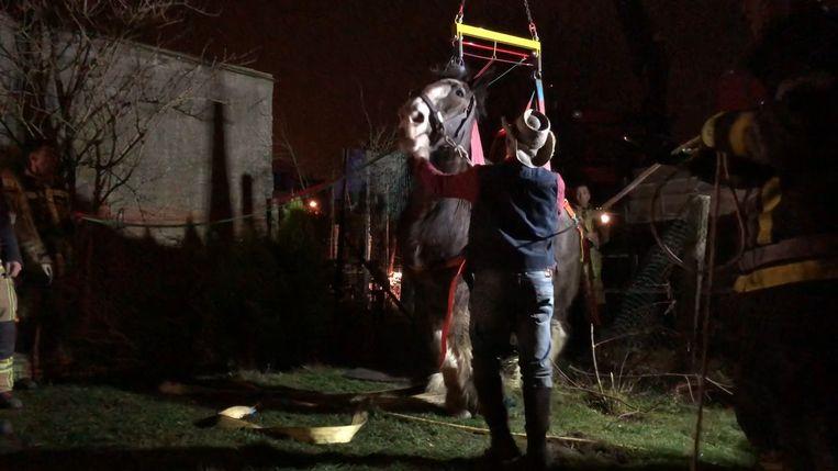 De brandweer helpt het paard overeind.