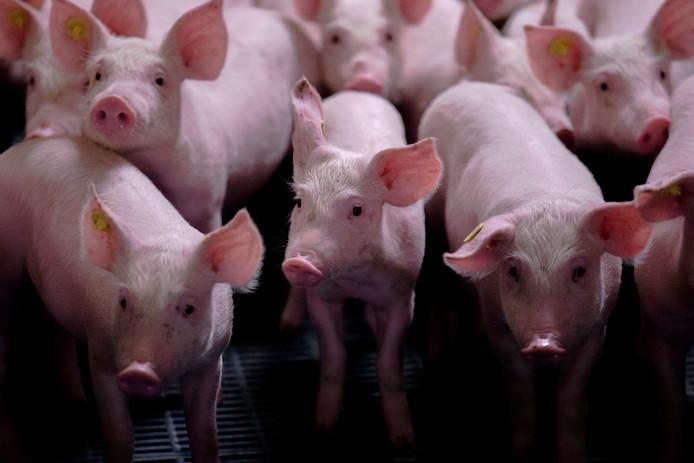 PrO en PGB willen 'duurzame krimp' van de intensieve veehouderij in Oisterwijk.
