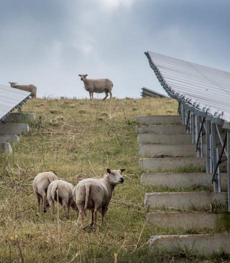 Energieadviseur: 'Panelen op weiland niet per definitie uitsluiten'