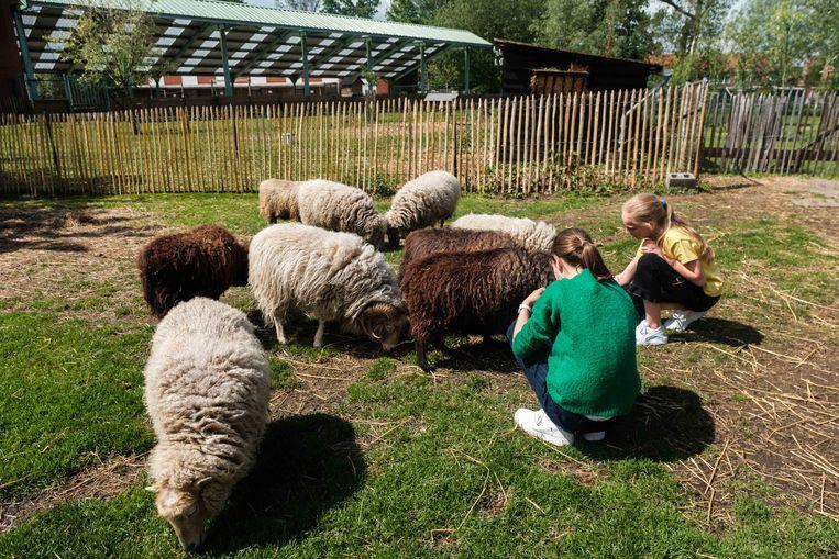 De dieren op de Kinderboerderij in de Altenaschool worden dagelijks verzorgd door leerlingen.