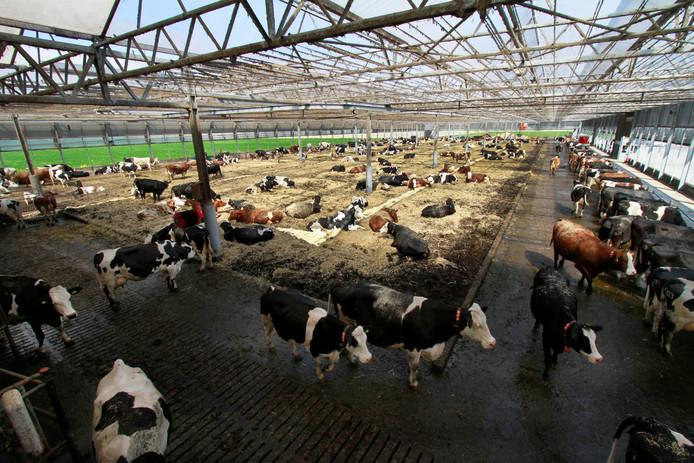 Met name in de melkveesector nam het aantal megastallen toe. Daar zitten echter ook voorbeeldbedrijven op het gebied van duurzaamheid en dierenwelzijn tussen, benadrukt de provincie. Zoals bij deze nieuwe stal in Moerdijk.