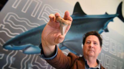 Tanden van 25 miljoen jaar oude haai gevonden in Australië