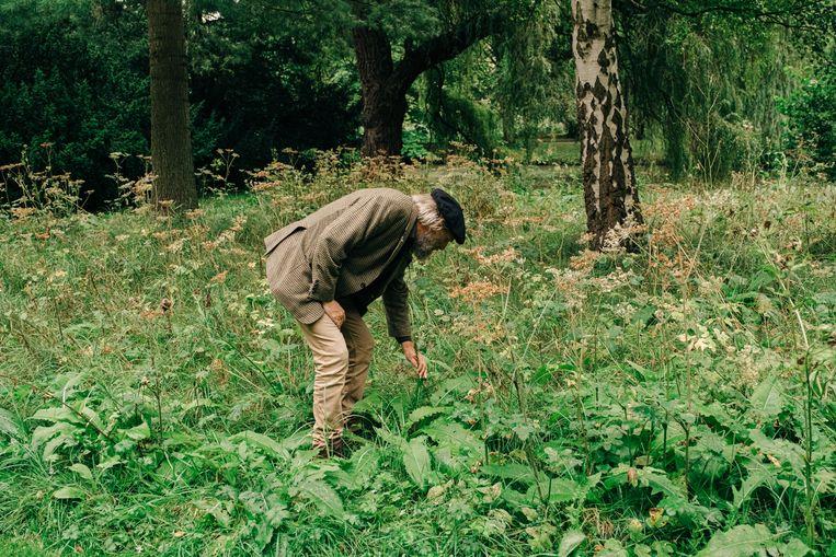Laat het gras maar groeien: in Aalst en Kortrijk hoeft maaien niet langer