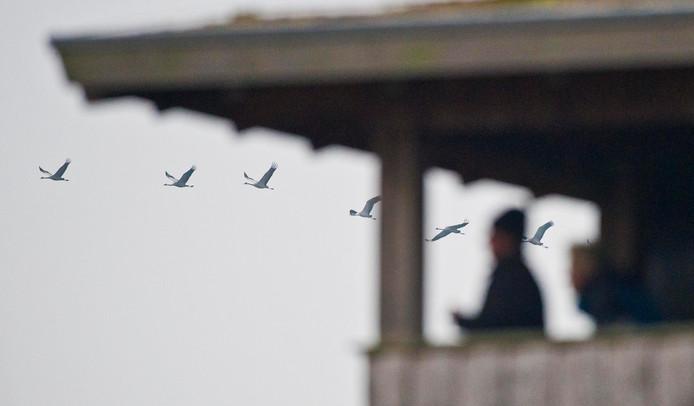 IPTCBron  © 2011 Wouter Borre / De Twentsche Courant Tubantia  DIEPHOLZ;NLD;The Netherlands;DIEPHOLZ     Diepholzer Moor. Kraanvogelexcursie. Kraanvogels kijken vanuit de bus en uitkijktoren editie :  AL   foto Wouter Borre  WB20111110
