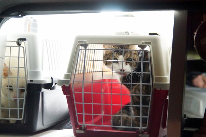 De dieren zijn in het asiel opgevangen.