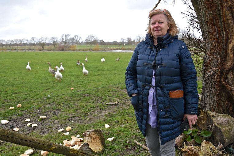 Bij Marleen Becarren werd een gans doodgebeten, vermoedelijk door een vos.