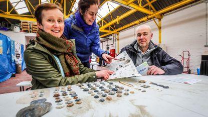 """50.000 schelpen geteld tijdens tweede schelpenteldag: """"Probeer halfgeknotte strandschelp en nonnetje maar eens van elkaar te onderscheiden"""""""