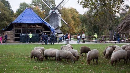 Lopen langs oude huisjes en schapen