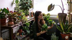 """Zo verbeter je de luchtkwaliteit in je huis: """"Dat planten lucht zuiveren, is een fabeltje"""""""