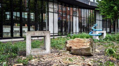 Vandalen trekken spoor van vernieling langs bibliotheek