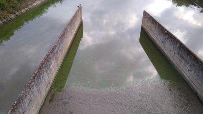 Giftige algen op Kanaal Brussel-Charleroi: verbod op watersporten in Lembeek