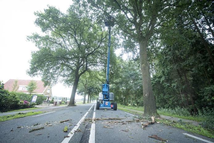GroenLinks pleit voor veilige fietspaden langs de Wierdensestraat voor de werknemers op 't Lochter.