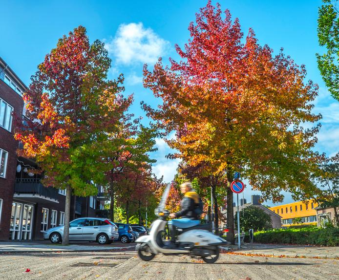 Extra foto's   Herfst in Delft op de Arubastraat staan de bomen vuurrood.