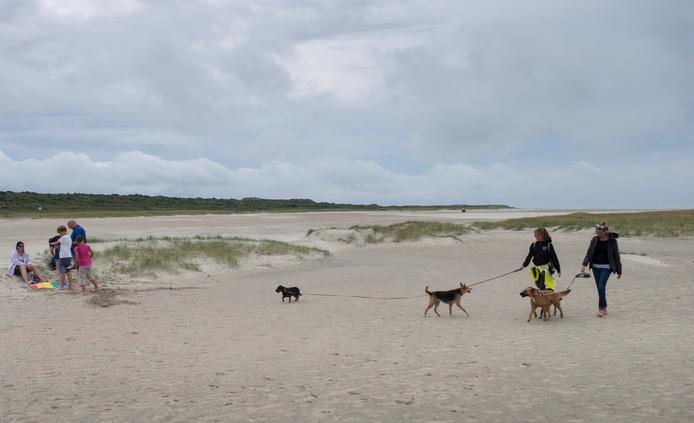 Jonge duingroei op het Verklikkerstrand bij Renesse wordt een zeldzaamheid.