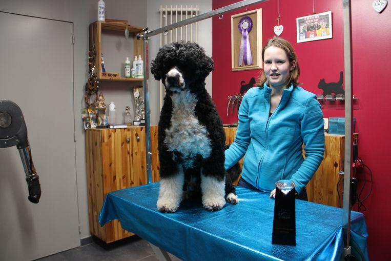 Sofie De Jonghe uit Meulebeke won met haar Portugese waterhond Frodo de eerste prijs op een Britse trimwedstrijd.