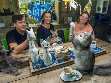 Gouda krijgt eerste kattencafé van de regio